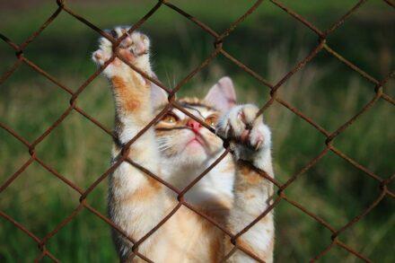kitten форекс