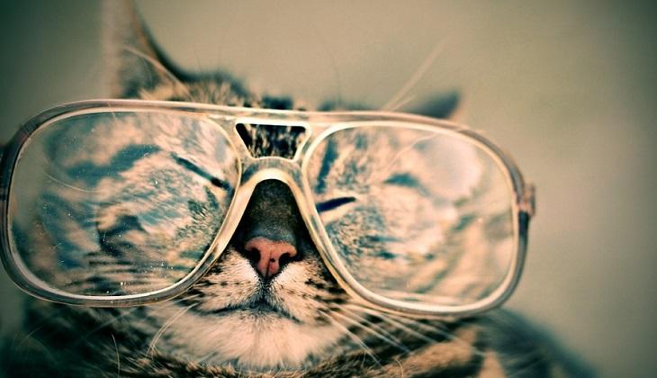 Налог на кошек