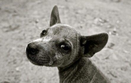 Трейдер-блохастая собака