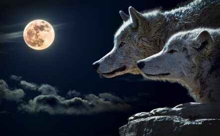 Трейдер-волк